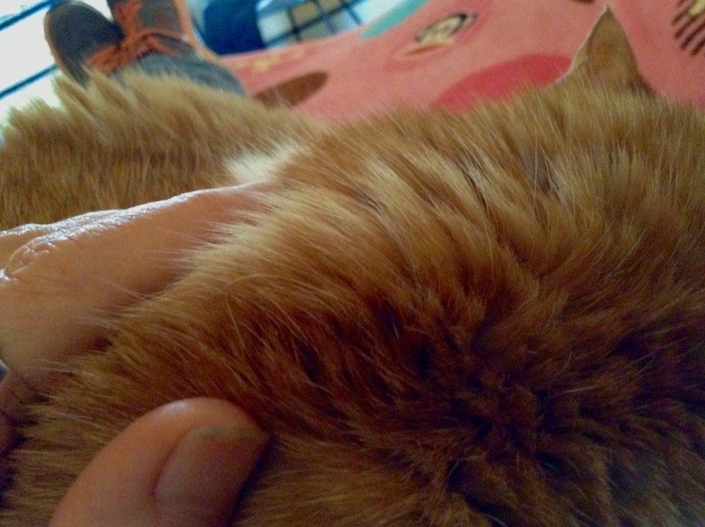Sarah Oblinger's cat Eddie